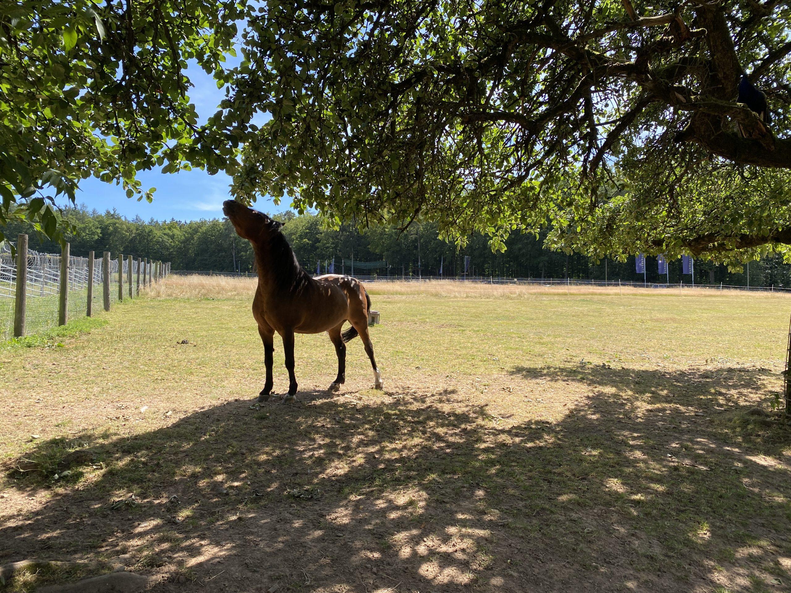 Tiere im Erlebnispark Steinau